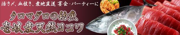 壱岐産天然ヨコワ!関西ではよこわ、関東ではメジなどと呼ばれるクロマグロの幼魚。下処理代無料!一本釣り