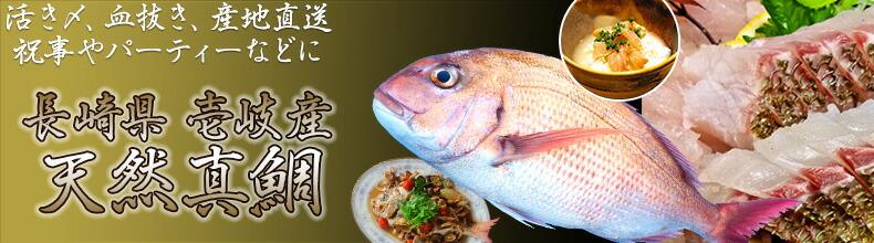 壱岐産天然真鯛。一本釣りなので鮮度も抜群!下処理代無料!