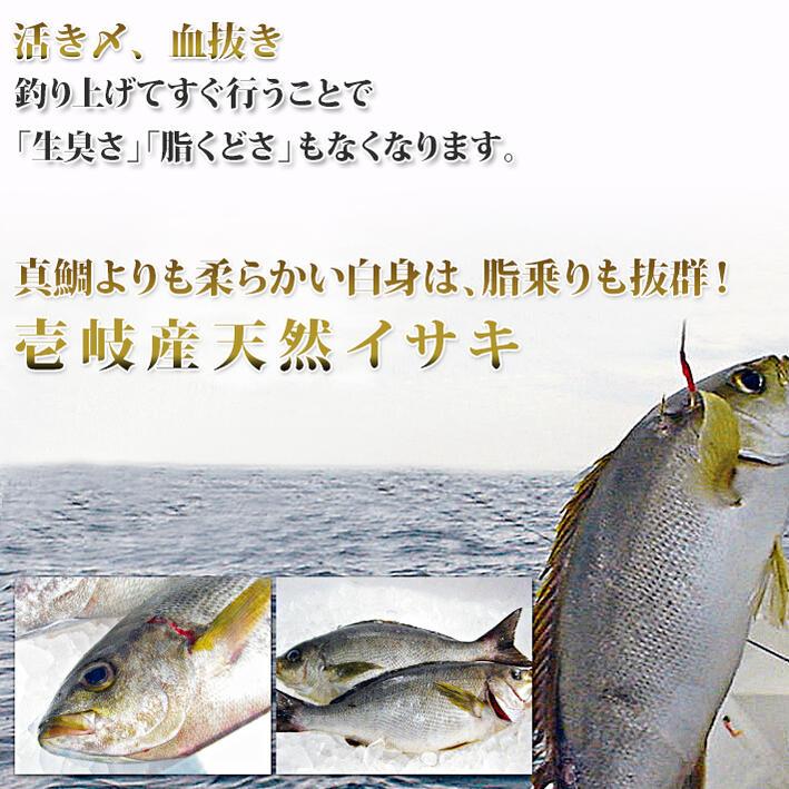 壱岐の昔から続く漁師伝統の技「一本釣り」で玄界灘から釣り上げた天然イサキ 壱岐島漁師のこだわりが最高の魚をご提供できる秘訣!一本釣り・・・網漁のように魚同士でぶつかりあったり、網にすれたりしないので魚の身に傷がつかないので鮮度が違う!価値が違う!活き〆、血抜き・・・釣り上げてすぐ行うことで「生臭さ」「脂くどさ」もなくなります。