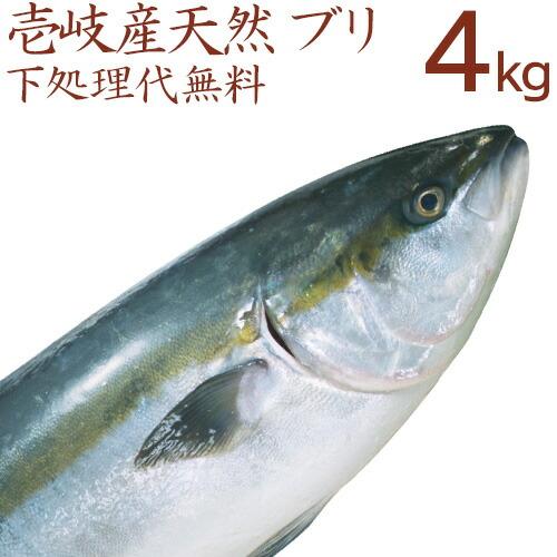 壱岐産天然ブリ4kg