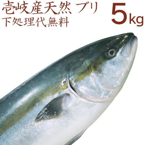 壱岐産天然ブリ5kg