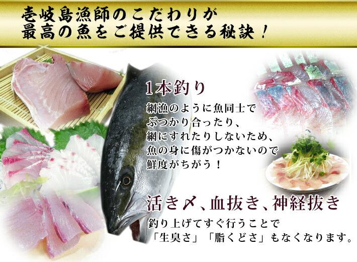 壱岐・長崎、ひらまさ、1本釣り