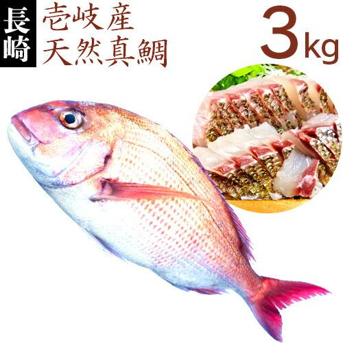 【H】天然真鯛3k