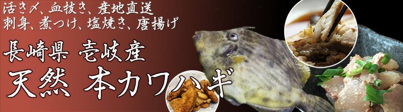 鮮魚 壱岐産本かわはぎ