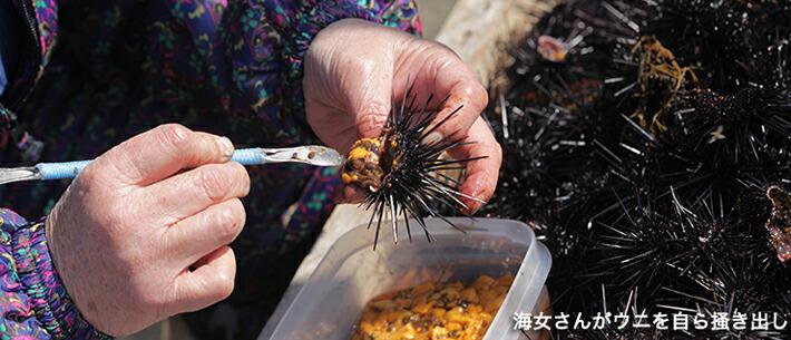 長崎県壱岐産 純正 生うに 海女さんが自らウニを掻き出し
