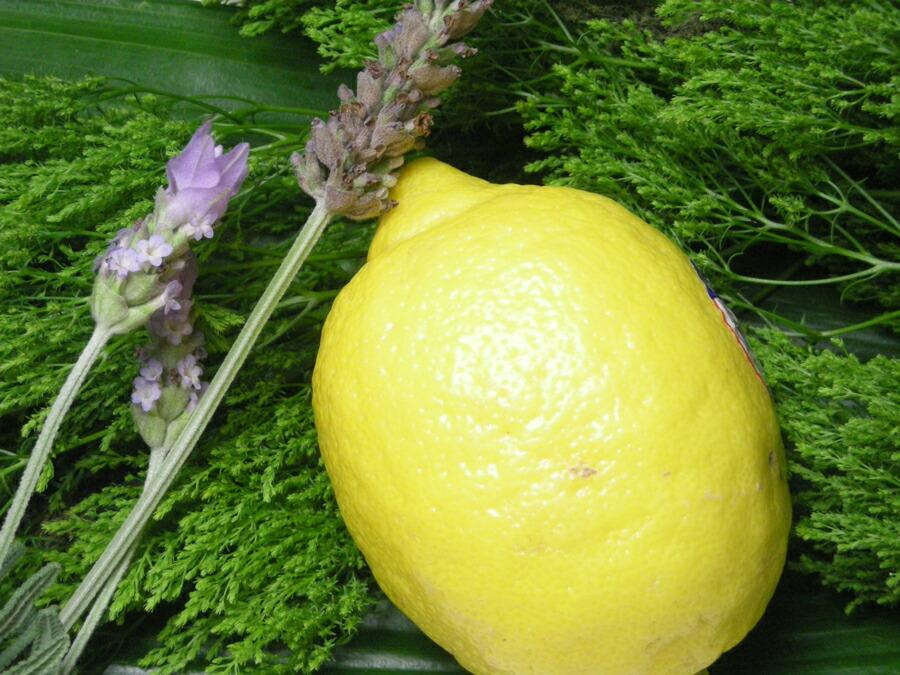 手作り石鹸アンティアンの固形石鹸シャンプー専用レモンビネガーリンス写真3