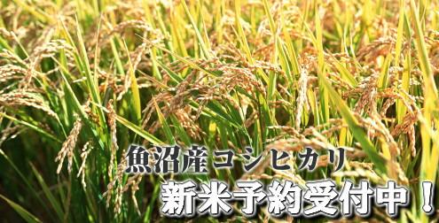 ゴクタカ59極Taka。全国の酒米を扁平精米59%磨き。協会1801酵母で醸すシリーズ!