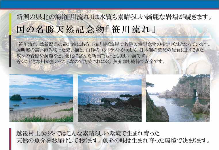 岩モズク(新潟山北産)