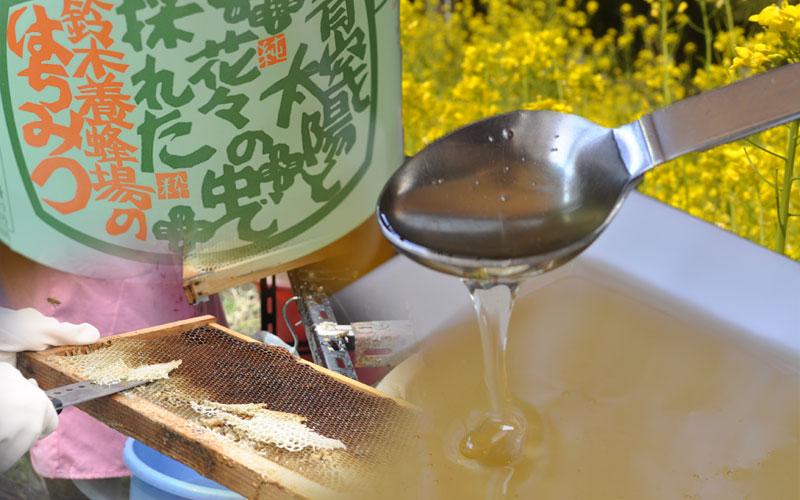 菜の花の香り豊かなハチミツ