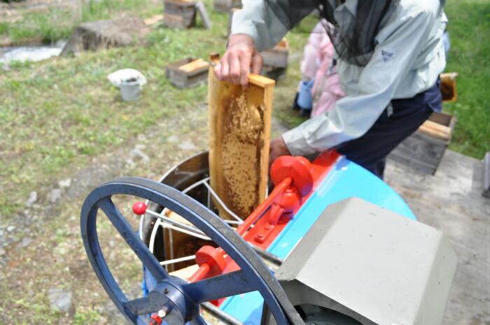 遠心分離機にミツバチの巣を入れる様子。