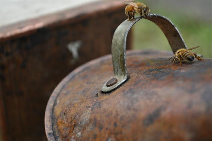ミツバチ。意外とかわいいものである。(刺されなければ・・・)