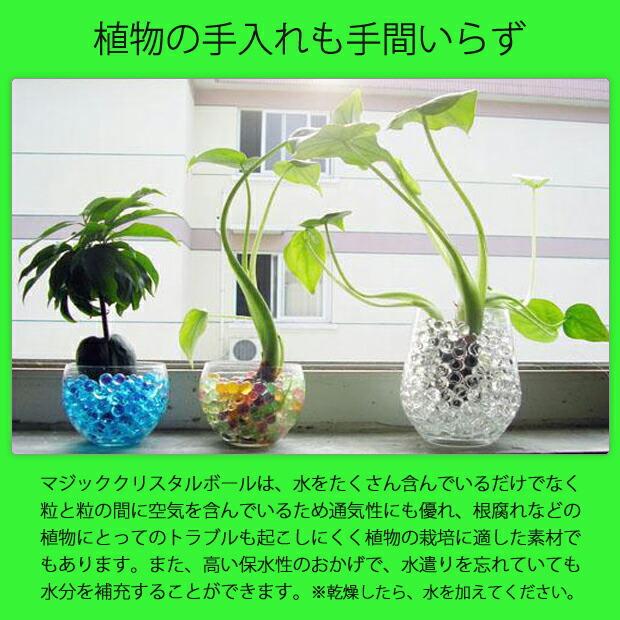 クリスタルボール ジェリーボール 植物の手入れも手間いらず