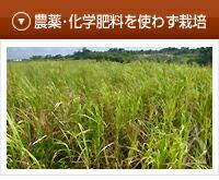 農薬・化学肥料を使わず栽培