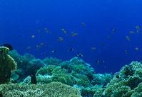 じねん:珊瑚礁