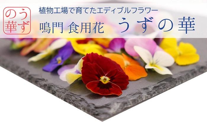 植物工場で育てたエディブルフラワー 鳴門 食用花【うずの華】