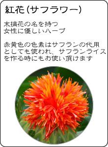 ヴィーナース|紅花茶