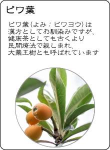 ヴィーナース|ビワ葉茶