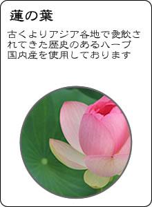 ヴィーナース|蓮の葉