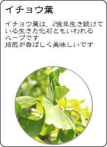 ヴィーナース|イチョウ葉茶