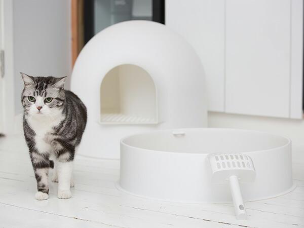 氷雪ハウス「イグルー」のような猫用トイレ