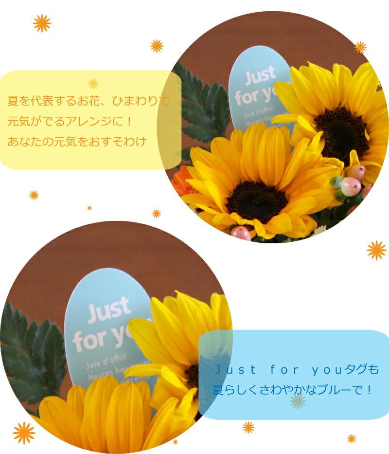 sum_ar_cute_kodawari.jpg