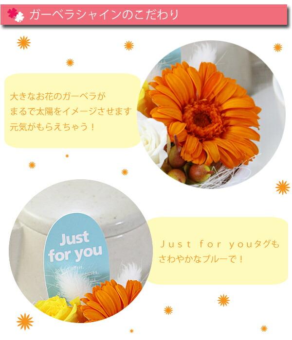 gerbera_shine_kodawa.jpg