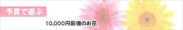 10,000円くらい〜