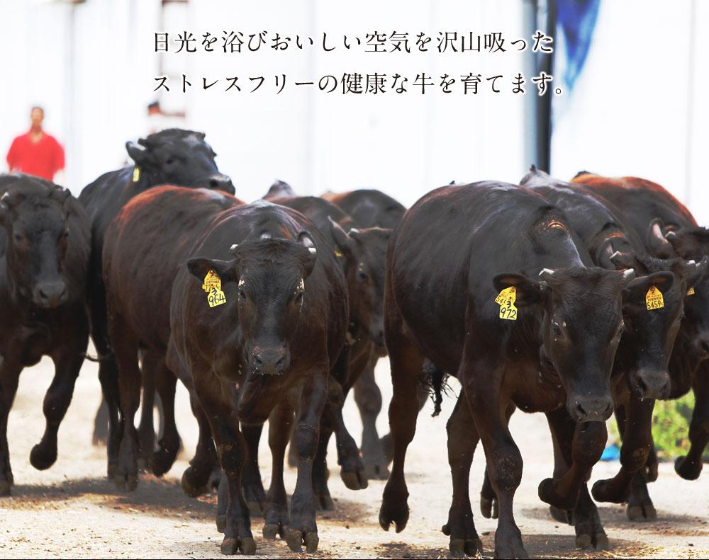 ストレスフリーの健康な牛