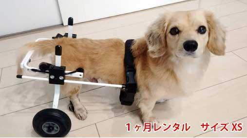 犬用車椅子レンタルXS
