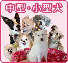 中型・小型犬