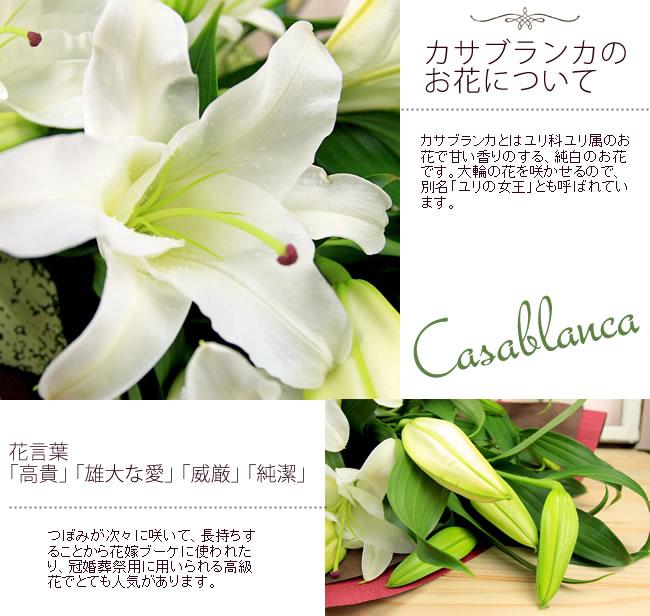 カサブランカのお花について カサブランカとはユリ科ユリ属のお花で甘い香りのする、純白のお花です。大輪の花を咲かせるので、別名「ユリの女王」とも呼ばれています。花言葉「高貴」「雄大な愛」「威厳」「純潔」つぼみが次々に咲いて、長持ちすることから花嫁ブーケに使われたり、冠婚葬祭用に用いられる高級花でとても人気があります。