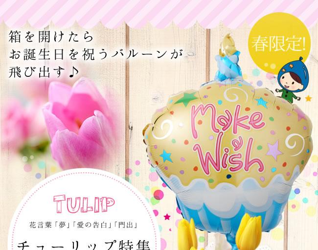 【春限定】チュー  リップ特集 花言葉「夢」「愛の告白」「門出」箱を開けたらお誕生日を祝うバルーンが飛び出す♪