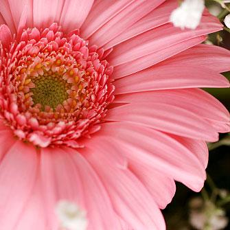 flowershower002.jpg