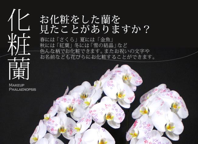 お化粧をした蘭を見たことがありますか?春には「さくら」夏には「金魚」秋には「紅葉」冬には「雪の結晶」など色んな柄でお化粧できます。またお祝いの文字やお名前なども花びらにお化粧することができます。