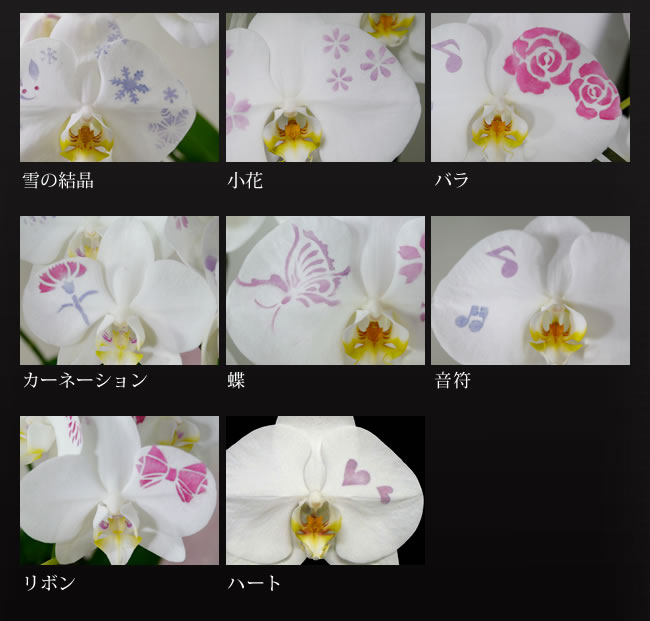14kesyou-r08-03a.jpg