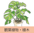 観葉植物・植木