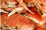 甲殻類の殻に含まれるキトサン