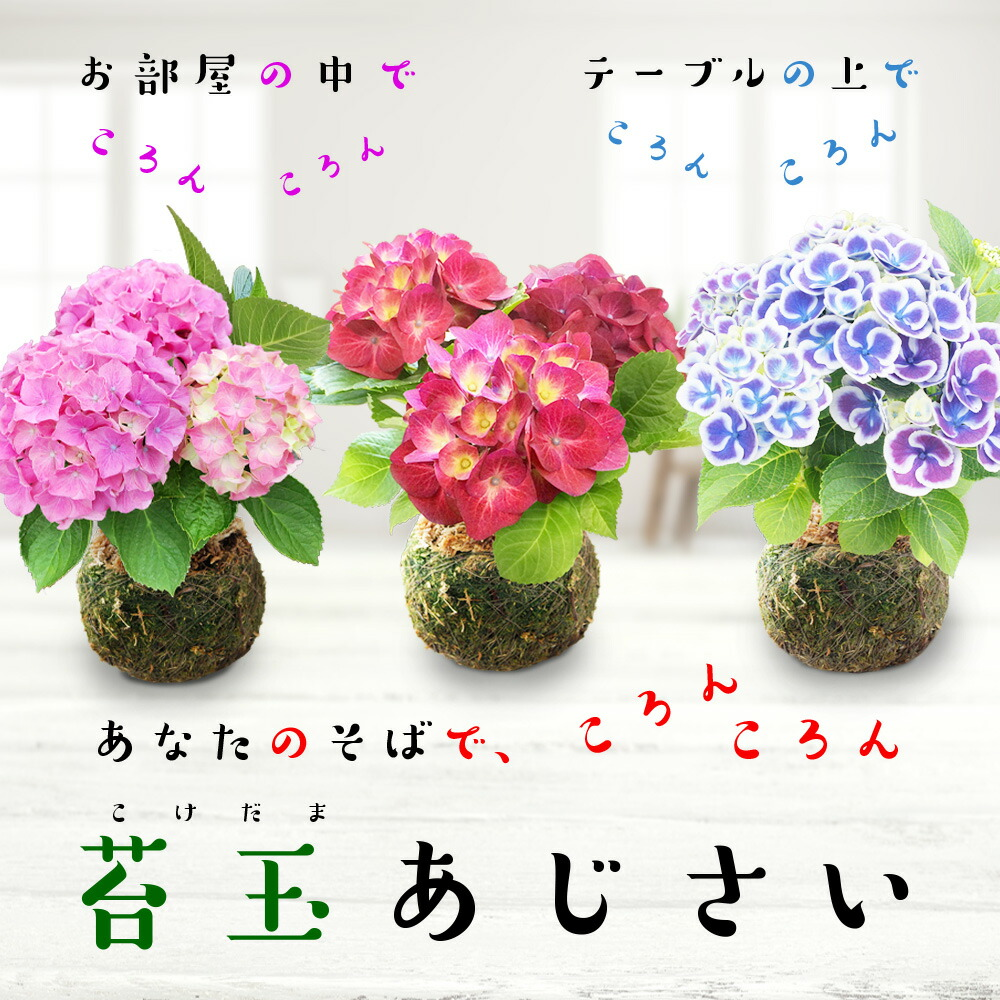 8位:苔玉あじさい(ハッピーガーデン)