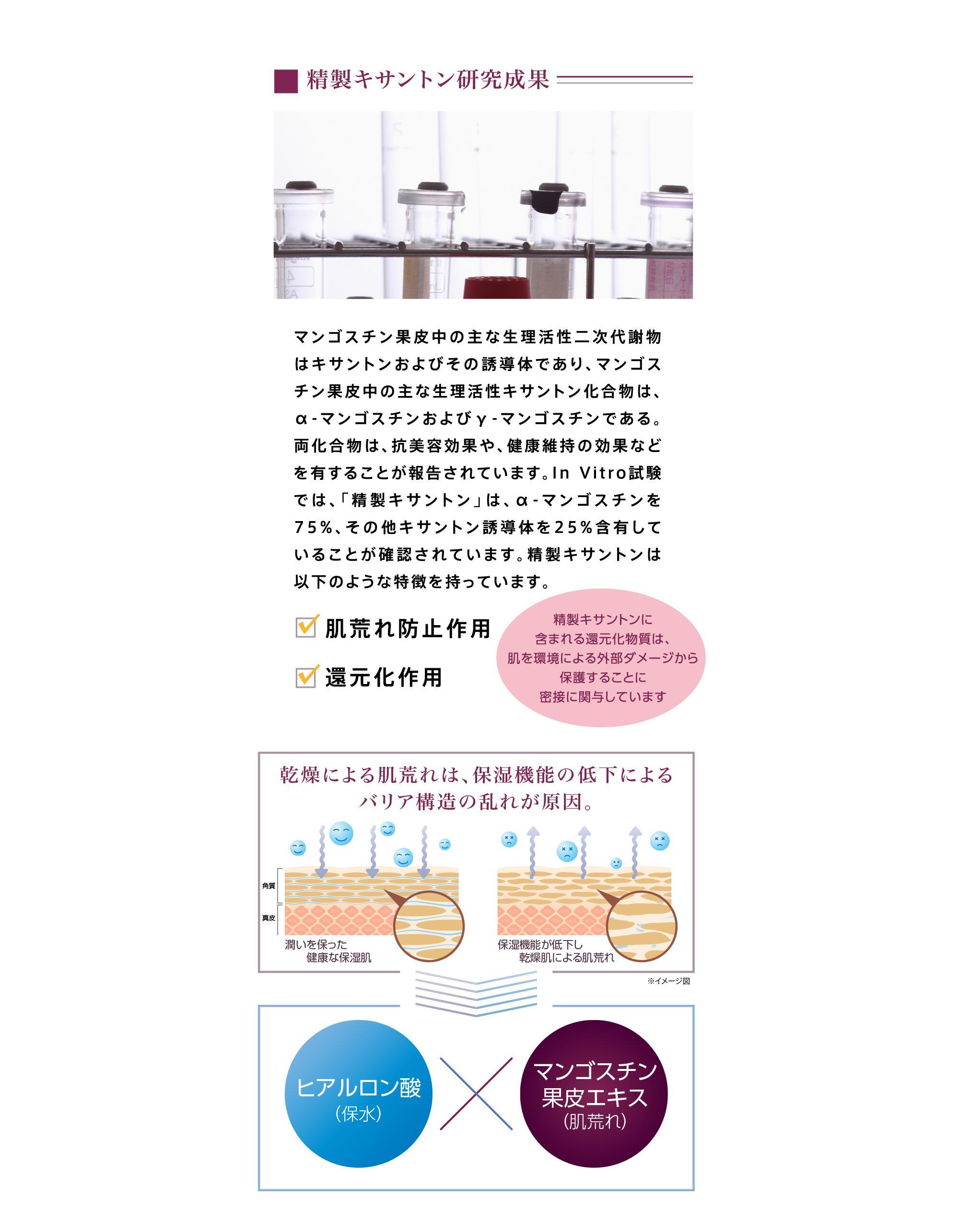 精製キサントン研究成果。乾燥による肌荒れは、保湿機能の低下によるバリア構造の乱れが原因