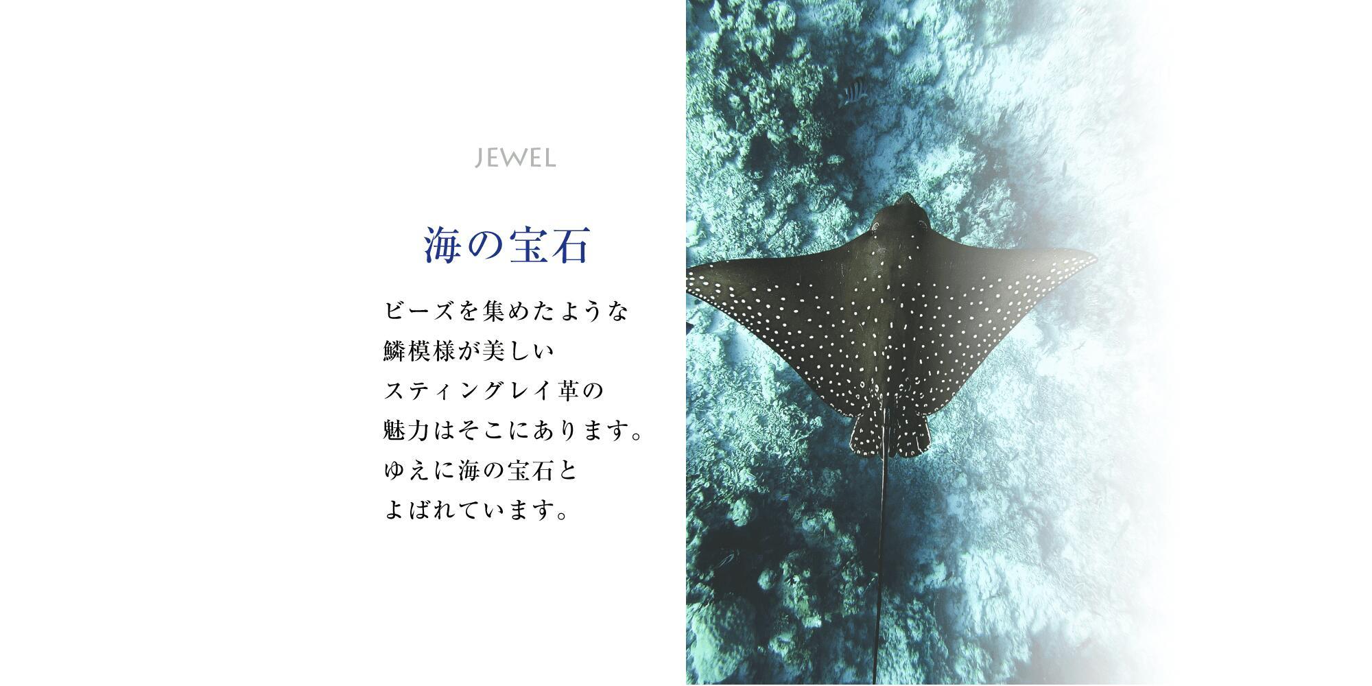 海の宝石ビーズをあつめたような鱗模様が美しい