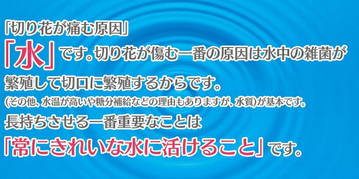 切花延命剤ココスキープ36ヶ入り(12ヶ入り×3セット)