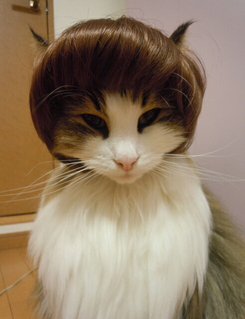 Wigs2you It Is Dog Cat For Pet Wig P 010 Bob