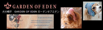 犬の帽子garden of eden