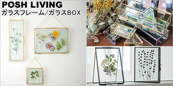 ガラスフレーム/ボックス