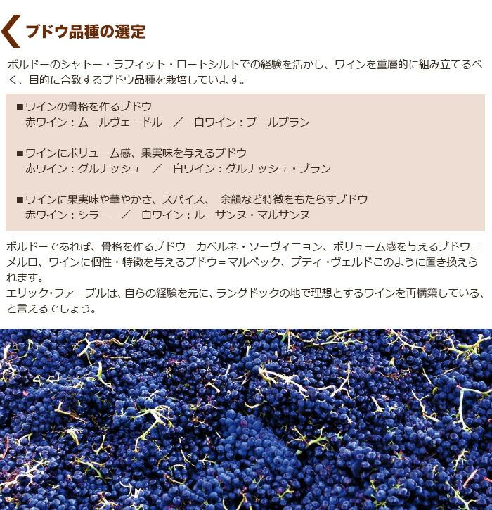 ブドウ品種の選定
