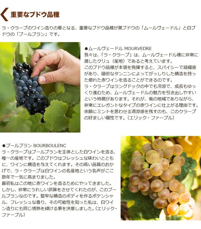 重要なブドウ品種