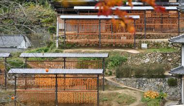 尾道柿園干し柿の風景3