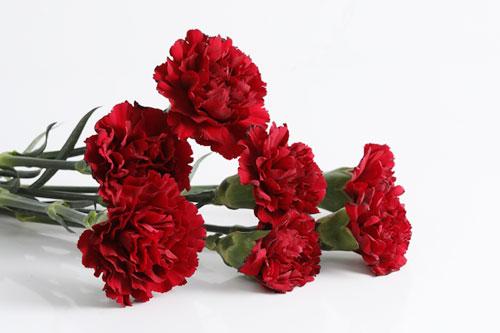 母の日の定番プレゼントはお花