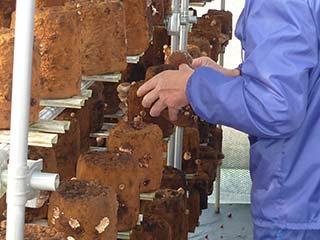 木工作業の様子
