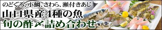 山口県産4種の魚 旬の酢〆詰め合わせ